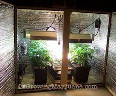 Set Up A Low Budget Marijuana Grow Room. Cheap Cannabis Grow Room. Grow Weed