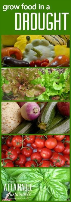1000 ideas about indoor vegetable gardening on pinterest for Indoor gardening meaning