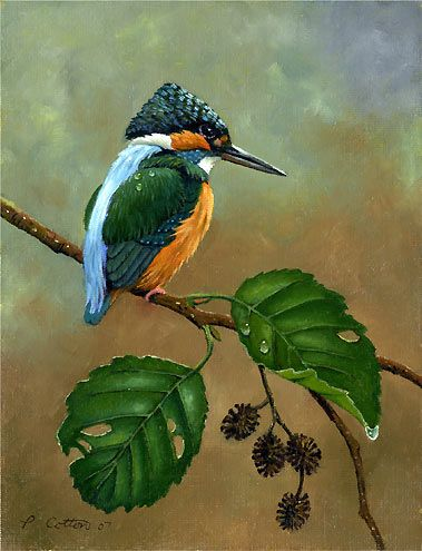 100 best Birds to Paint images on Pinterest