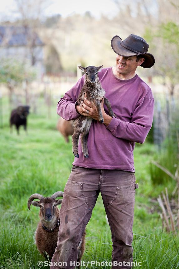Paul Kaiser with day old lamb, Soay sheep (Ovis aries), at Singing Frogs Farm, Sebastopol, California.