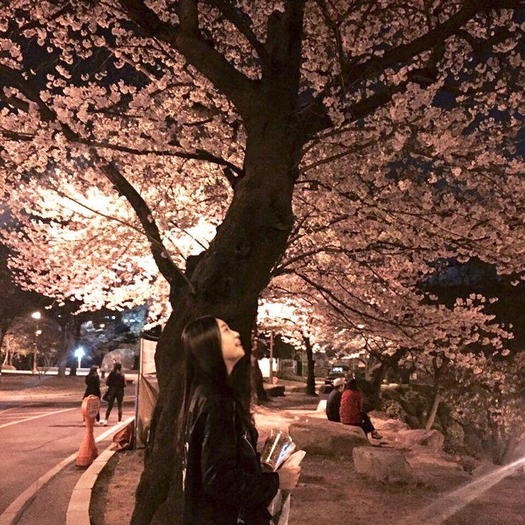 벚꽃놀이 ㅎㅎ 이뿌담