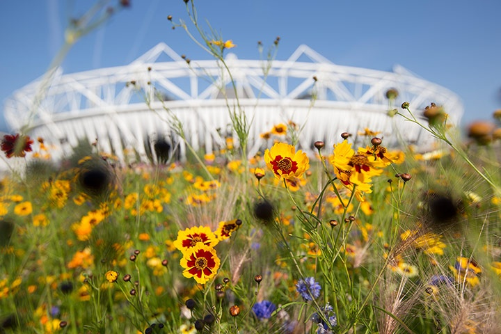 The Annual Meadows at the Olympic Park (David Levene)