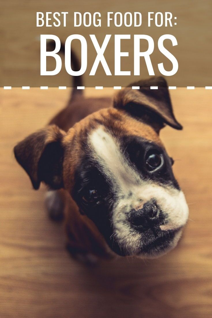 Are You The Proud Owner Of A Sweet Baby Boxer Get The Best Eats For Your Boxer With These Kibble Picks Dogs Best Dog Food Dog Food Recipes Homemade Dog Food