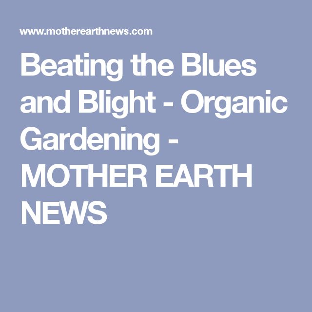 Beating the Blues and Blight - Organic Gardening - MOTHER EARTH NEWS