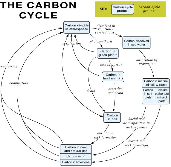16 best carbon cycle images on Pinterest   Earth science, Life ...
