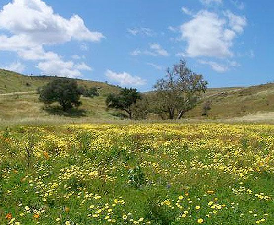 Stover Seed provides grass seeds solutions to control soil erosion & make greenery in any area.