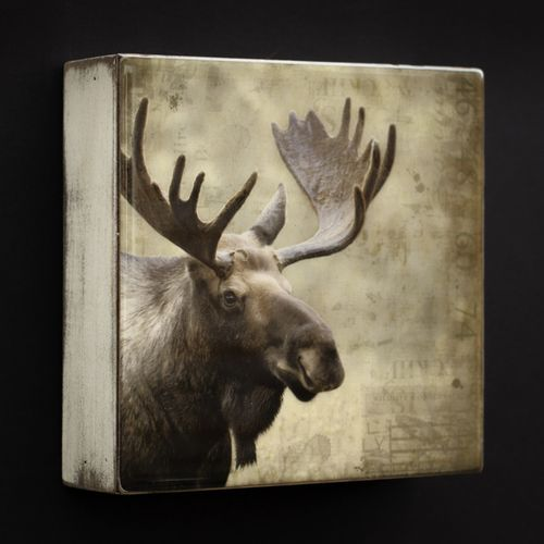 Art Block - Moose by Morgan Jones