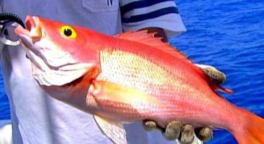 Cioba Fish ..
