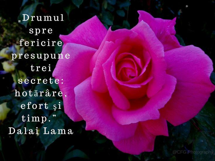 """""""Drumul spre fericire presupune trei secrete_ hotărâre, efort şi timp."""" — Dalai Lama https://photography.expoanunturi.ro/"""