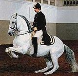 The Spanish Riding School in Vienna is the only institution in the world where the classic equestrian skills (haute école) has been preserved and is still practiced in its original form.