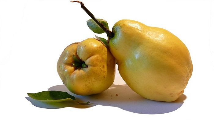 Gutuia este recomandata bolnavilor ce au stomac lenes.Quince properties are calming and sedative on the stomach.