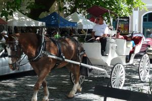 Horse & Carriage Tour- This is something I need to do in Puerto Rico!