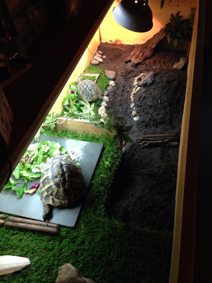 29 best tortoise table ideas images on pinterest tortoise habitat 2 level tortoise table with strip uv light and heat spot light at one end aloadofball Gallery