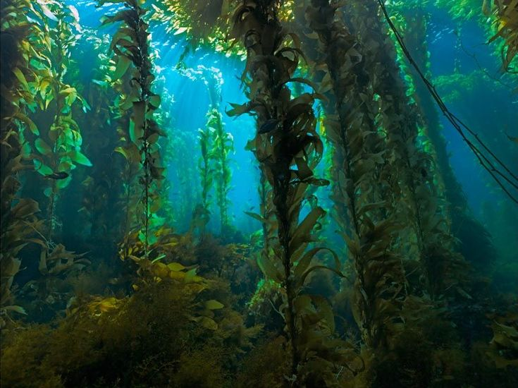 kelp forest wallpaper 10 best images about reference on 322