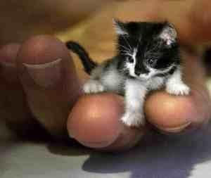 Just a tiny tiny little cat...
