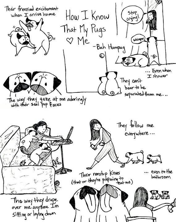How you know your pug loves you lol