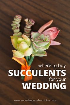 Best places to buy succulents for your wedding!