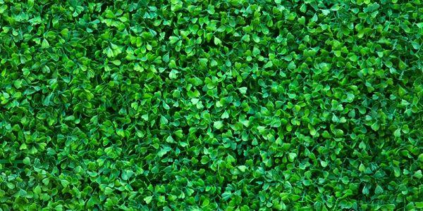 leaf pattern vinyl flooring - Google Search