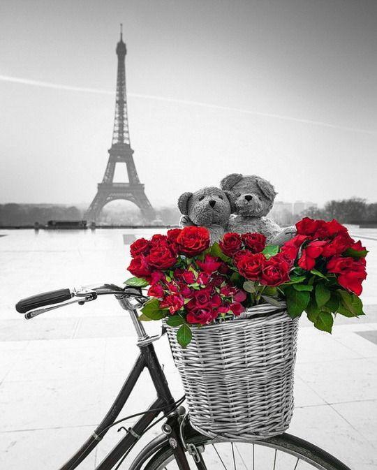 Bonjour à Paris, Paris, France, Roses, Bears