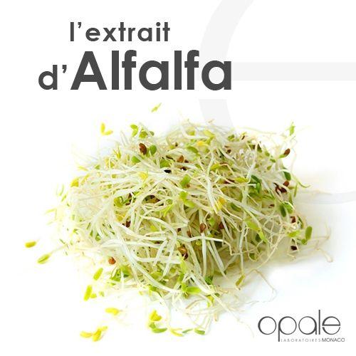 L'extrait d'Alfalfa stimule la synthèse du collagène. Revitalisée, la peau retrouve son éclat et les rides diminuent. Retrouvez ses bénéfices dans nos soins antiâge visage, yeux & lèvres et dans notre sérum lift.