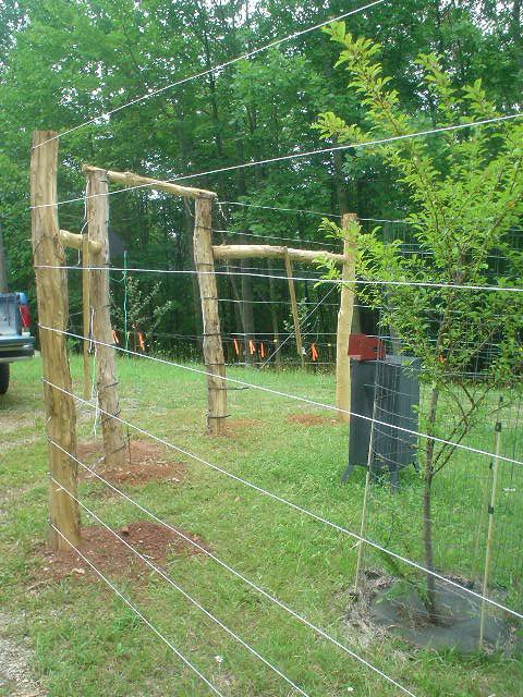 25 b sta vegetable garden fences id erna p pinterest - How to keep deer out of garden home remedies ...