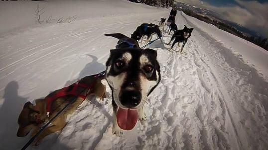 Do All Canadians Ride Dog Sleds?   http://www.oneadventureatatime.com/blog/do-all-canadians-ride-dog-sleds