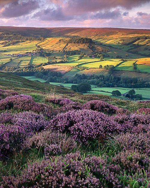 Rosedale, North Yorkshire, England  photo via sechell: North Yorkshire, Favorite Places, Lavender Fields, Color, Yorkshire England, Landscape, English Countryside, Photo, Wanderlust
