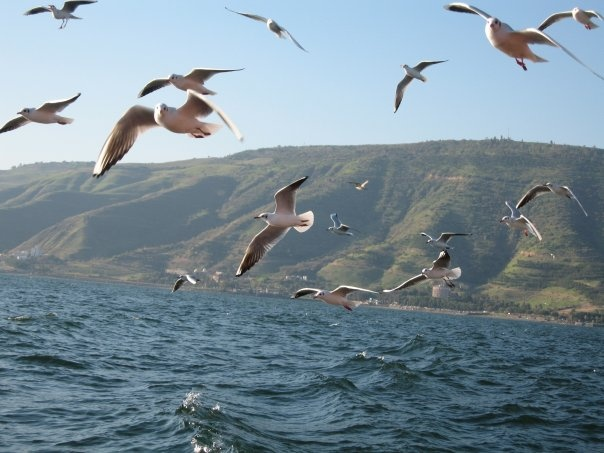 Sea of Galilee, Israel...ahhhh...when I close my eyes, I can still feel the breeze and smell the intoxicating fragrance of the Sea of Galilee, while hearing the chatter of the birds!! My wish is that ALL of God's children can visit Israel!!❤️I have been changed forever!