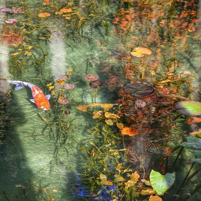 岐阜県:モネの池(通称) これ、絵画ではありません。実際に岐阜県に存在する、れっきとした「池」なんです!