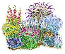 Flower Garden Ideas For Full Sun pretty plan for full sun perennial flowers i have purchased most of these seeds Beginner Garden For Full Sun