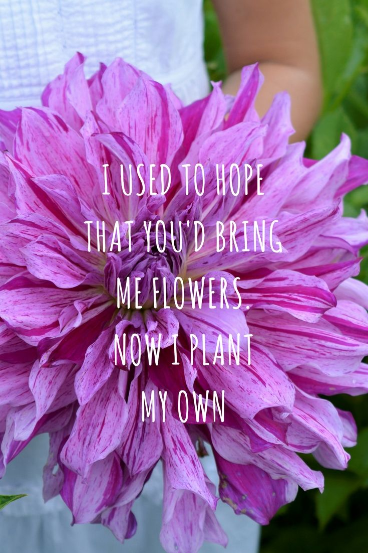 15 best flower garden quotes images on pinterest but now i buy them at fam flower farm and plant my own all year long flowers in my garden yeah flowergarden flowers plantmyown gardening dahlias izmirmasajfo