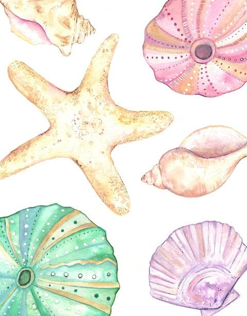 Seashells / watercolor print/ teal/light by kellybermudez on Etsy, $20.00