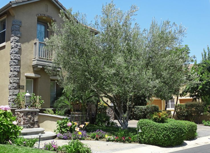 Menu For Olive Garden: 17 Best Images About Backyard Trees On Pinterest