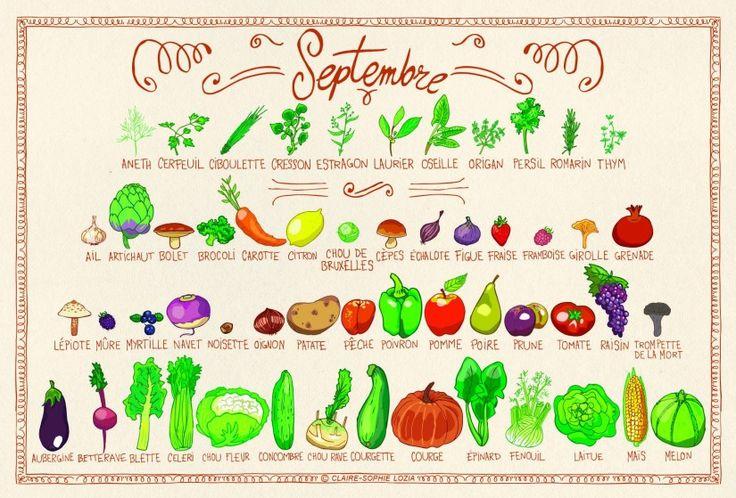 Comme chaque mois, sur mrmondialisation.org, voici le calendrier des fruits et légumes du mois en cours, illustré par la talentueuses Claire-Sophie. De quoi pouvoir consommer responsable en un seul regard.