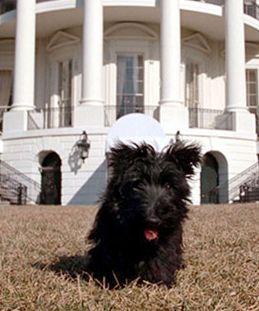 White House Pets - Barney.