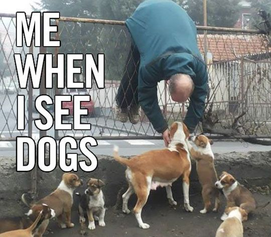 "Guilty of announcing, ""PUPPIES!"" whenever I see a dog and then wanting to run to it!"