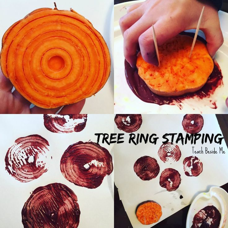 Tree Ring Stamping with Sweet Potatoes