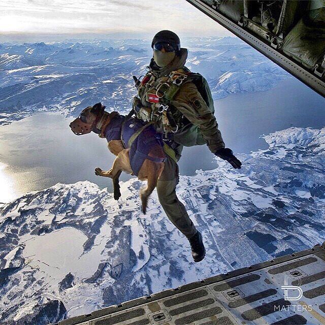 Military dog jumps off plane ✈️ Would you jump ? (by ©Sgt. Manuel J. Martinez, U.S. Air Force)