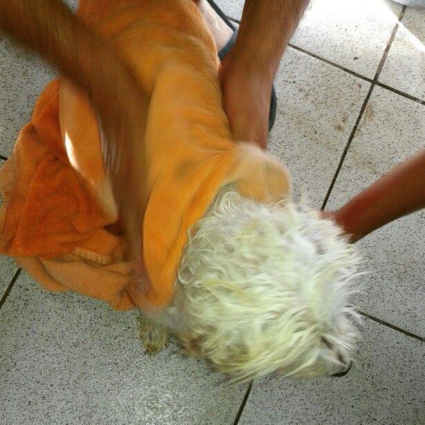 Secando a mi #perro #dog  de darle un #baño
