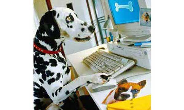 Online business является отличным выбором для начинающего предпринимателя.