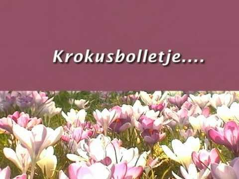 """Opnames van de bekende lentebloem Krokus. Gecombineerd met het welbekende liedje """"Krokusbolletje kom eens uit je holletje""""."""