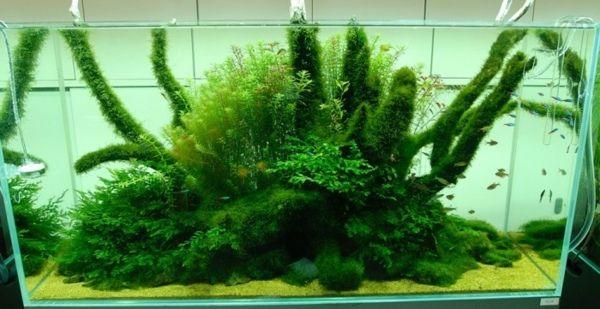Natur Mittelmeer Aquarium Stil