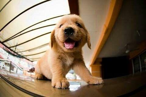 #cucciolo #felice #happy