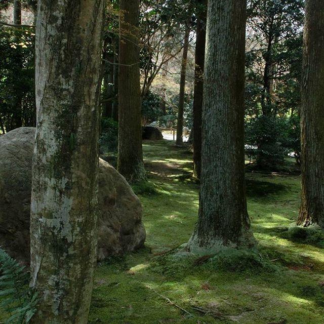 【brownshewolf】さんのInstagramをピンしています。 《#ryuanji #moss #temple #kyoto #travel #japan2016 #japan #日本 #wood #park #森》