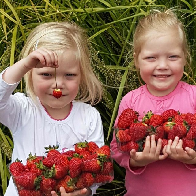 Let's jump all the way back to the 27th of October where we got a visit from these two little cheeky strawberry pickers. They just happened to be our first strawberry pickers of the season! Strawberry picking is open 9-4.15 daily. See http://bit.ly/2eRFGwn for details. #Beerenberg #BeerenbergFarm #ThrowBackThursday #Hahndorf #FarmShop #StrawberryPicking #AdelaideFruitPicking