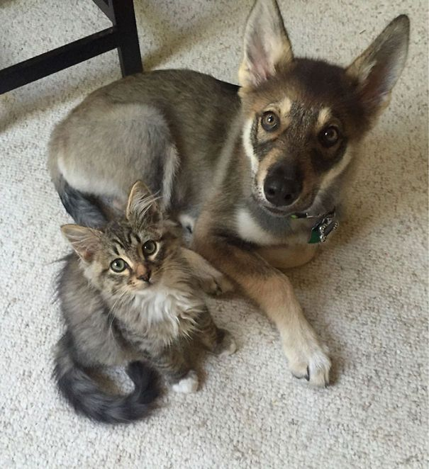 What You Get When You Let Your Puppy Pick Out A Buddy. Get a Free Consultation for your #dog from our Friends at Nature's Select http://naturalpetfooddelivery.com/nsd/usa/free-consultation/ #cats