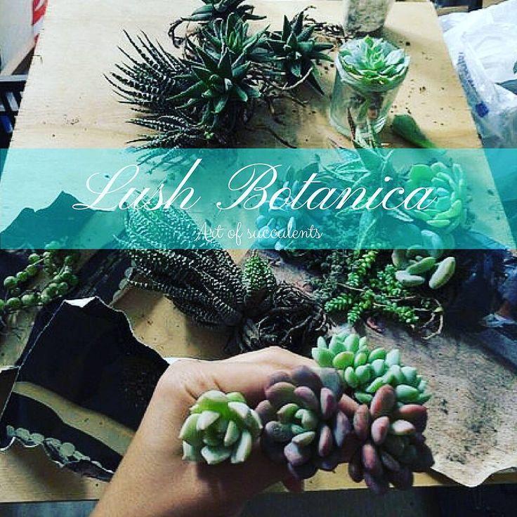 Ура у @lushbotanica.ua новые поступления суккулентов! Ждём красоту! #красиво #днепропетровск #succulentlove