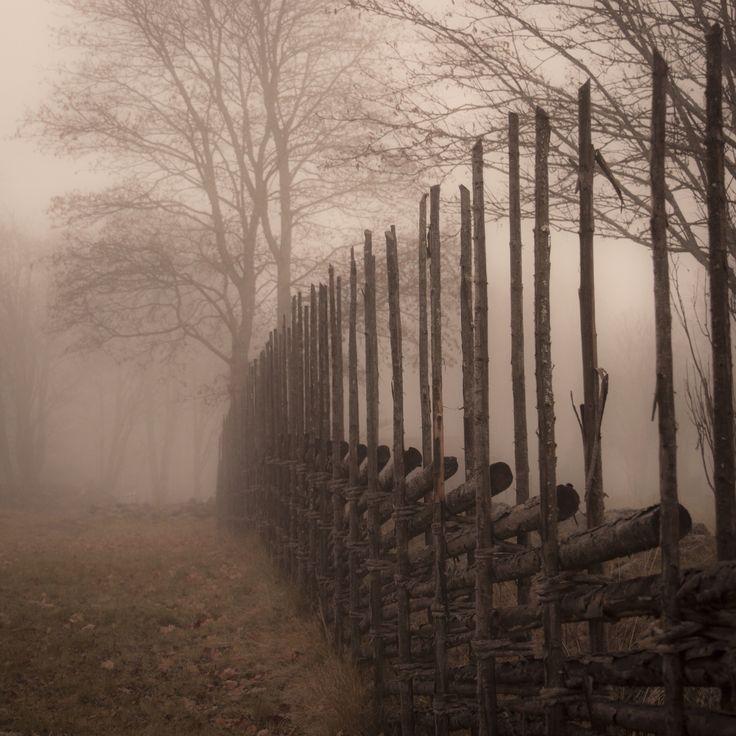 Sooo romantic. Picture of traditional swedish fence (gärdesgård) enveloped in mist. Taken in Källslätten, Falun.