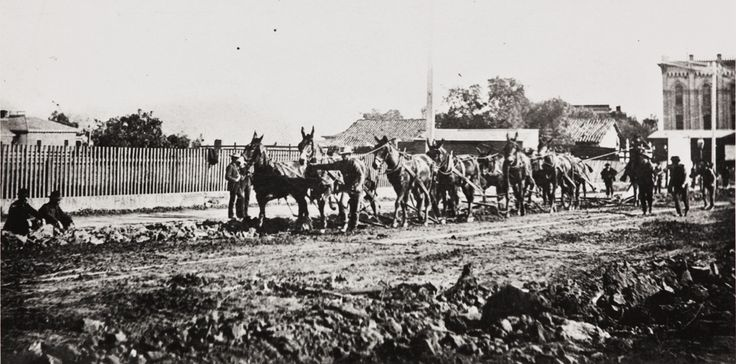 Here's a photo of horses plowing up State Street with 1st National Bank on the right. Santa Barbara, California