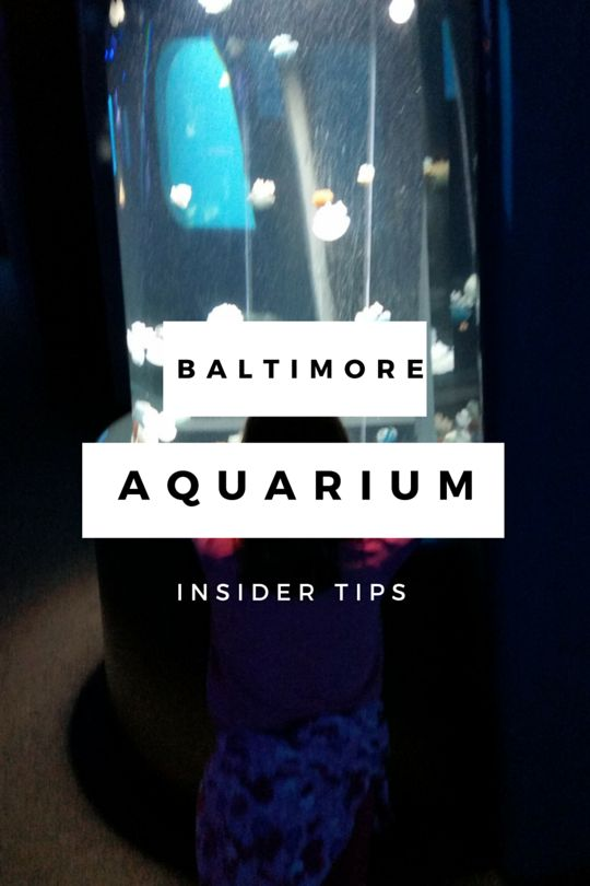 Baltimore Aquarium Tips that Will Save Your Sanity                                                                                                                                                                                 More